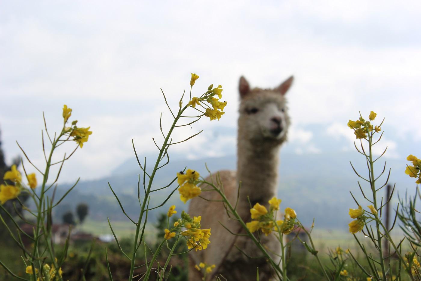 Chinchero (Foto: Tati Sisti)