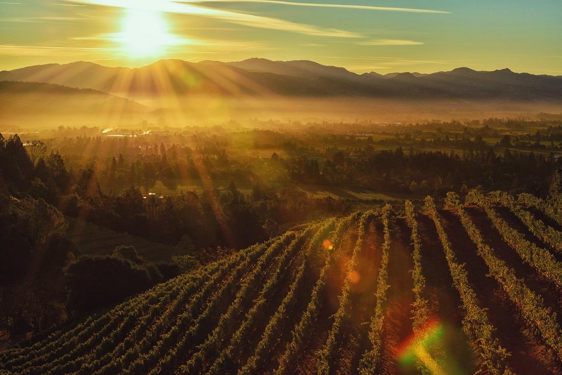 Casamento em vinícola (Foto: Divulgação)