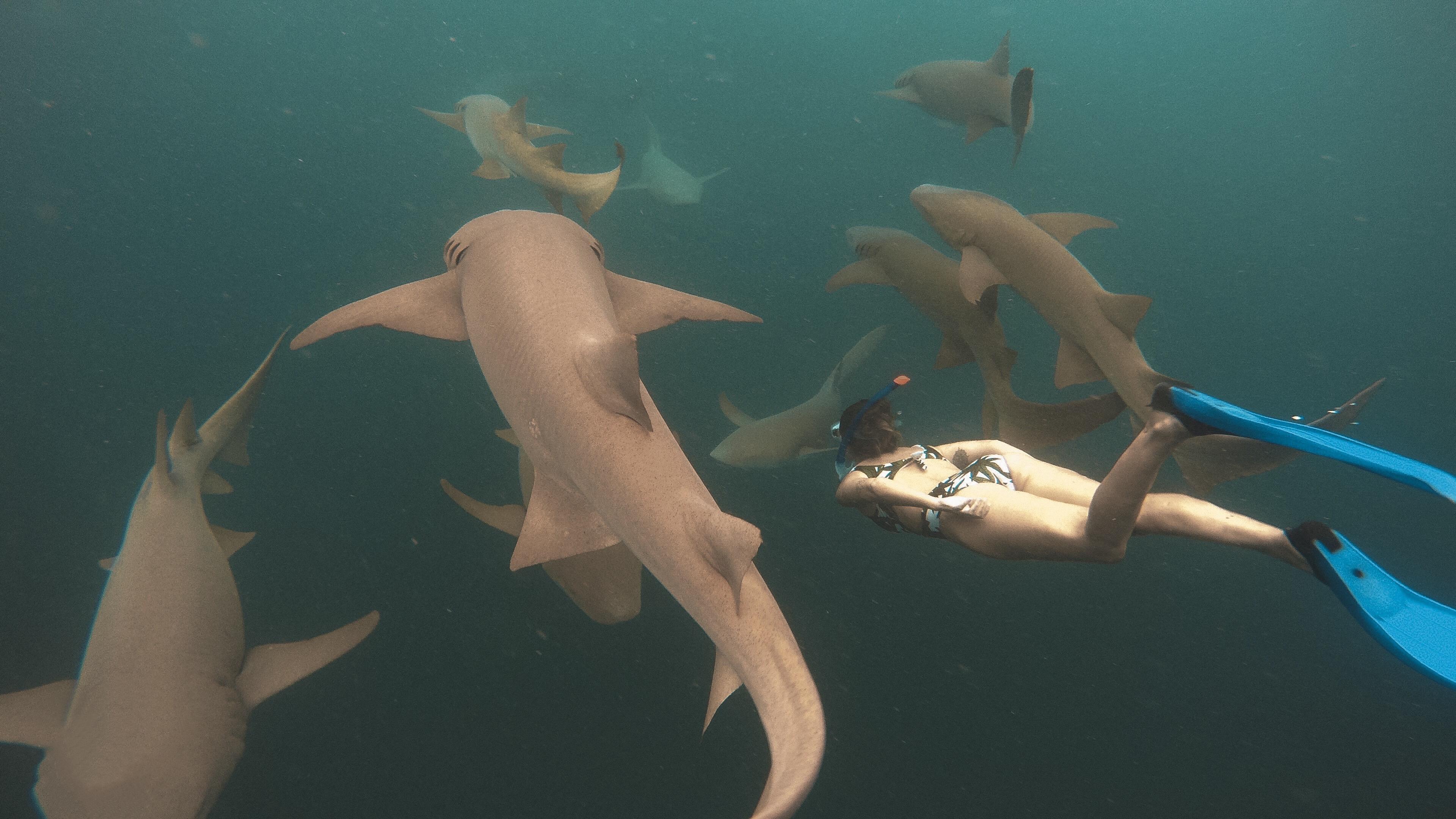 Mergulho com tubarões no Anantara Dighu (Foto: Trip To Follow)