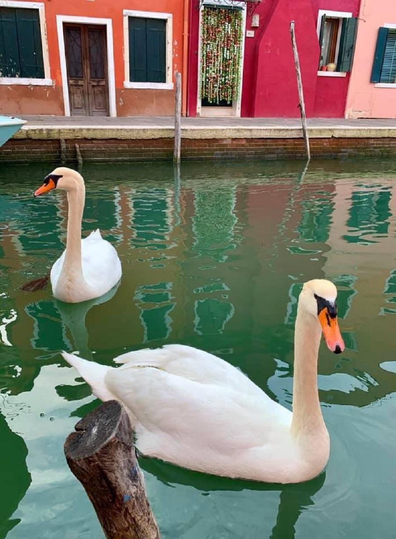 Canais de Veneza ficam mais limpos (Foto: Reprodução)