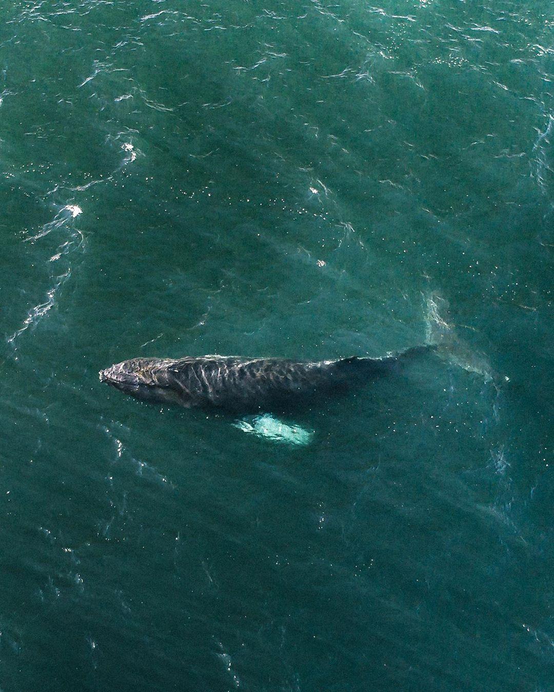Avistamento de baleia (Foto: Reprodução @icelandic_exploreer)