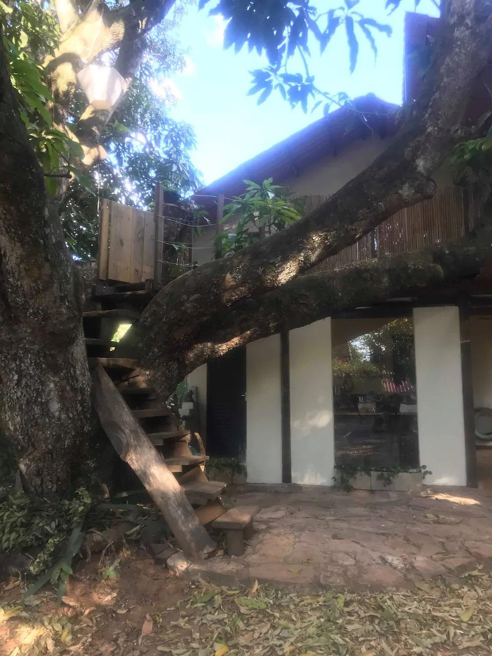 Casa na árvore (Foto: Divulgação/Airbnb)