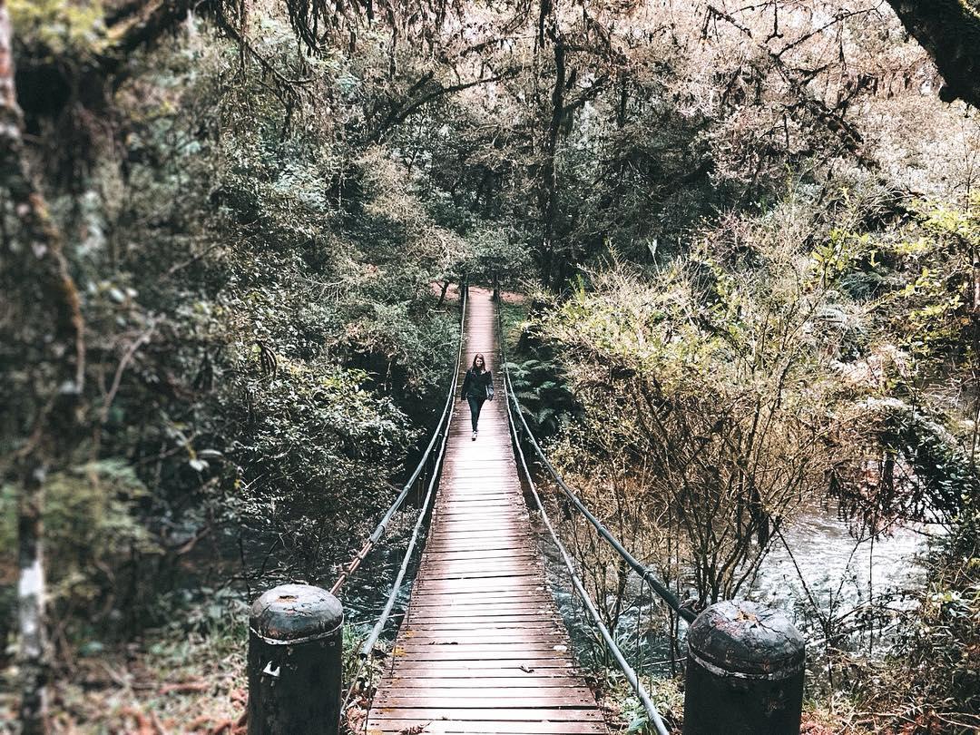 Horto Florestal, em Campos do Jordão (Foto: Trip To Follow)